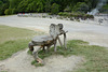 Azores, Island of San Miguel, Armchair in the Park of Furnas