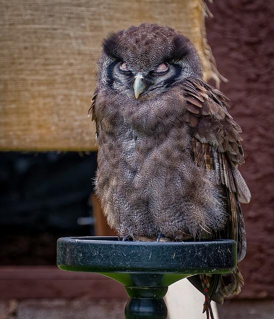 Cheshire Falconry.23jpg