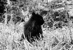 Meadowcat
