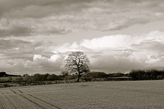 Gnosall clouds