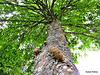 Under Branches.