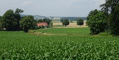 Green fields green trees
