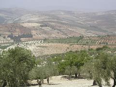 le pays de Nefertiti