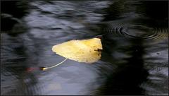 Dérive humide.... d'automne