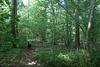 BDD - woodland walk