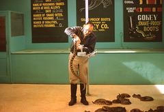 Rattlesnake Milking Demonstration at Ross Allen's Reptile Institute, Silver Springs, Florida, 1960s