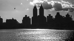 Central Park Silhouette - 1986