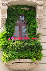 1 (26)...austria vienna window..fenster