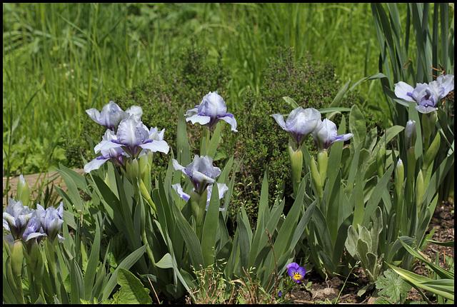 Iris Sapphire Jewels