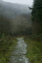 End of the path