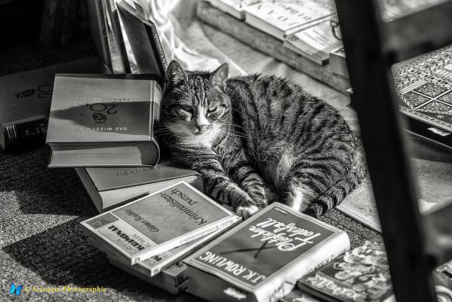 Antiquariat-Katze (Katzequariat)