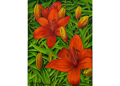 Lillies 11x14in