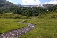 Almwiesen - Mittlere Weissbrunnalm