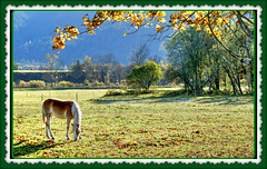 Kühler Herbstmorgen. Pfeadl. Ruhe. Cool autumn morning. Horses. Calm. ©UdoSm