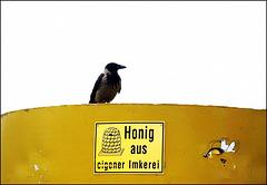 Geschäftstüchtige Krähe:)