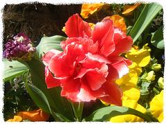 le printemps à vos pieds,