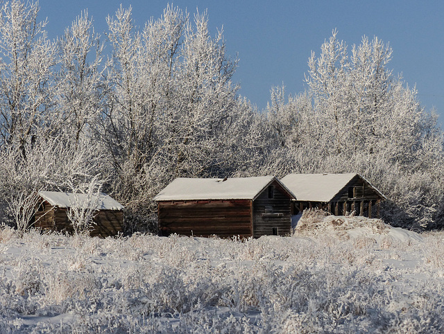 Old barns in heavy frost