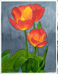 Red Tulips 11x14in