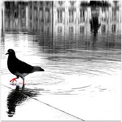 pigeon.com a testé pour vous : le rouge n'est pas soluble dans l'achromatie .