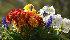 Bouquet printanier !