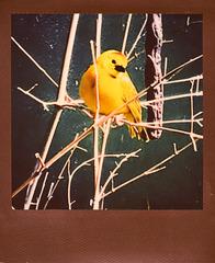 zoo bird yellow