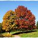 Le chemin de l'automne [ON EXPLORE]