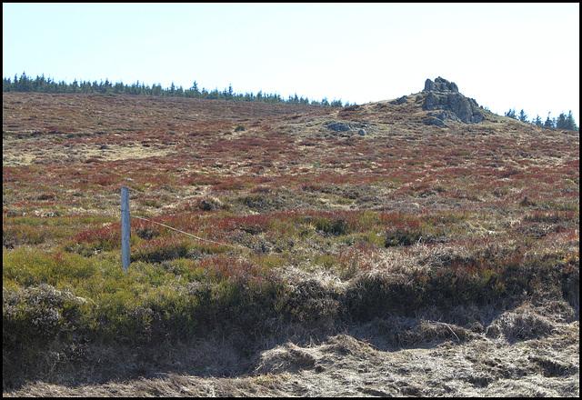 les landes à Ericacées (2)
