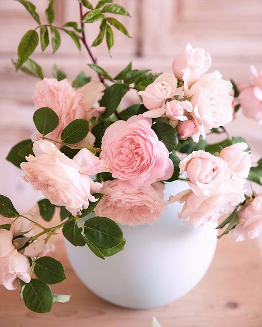 Roses anciennes d'un rosier planté par maman il y a bien longtemps!