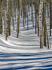 Forêt Zébrée IMG 134949