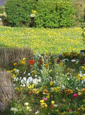 Nature fleurie