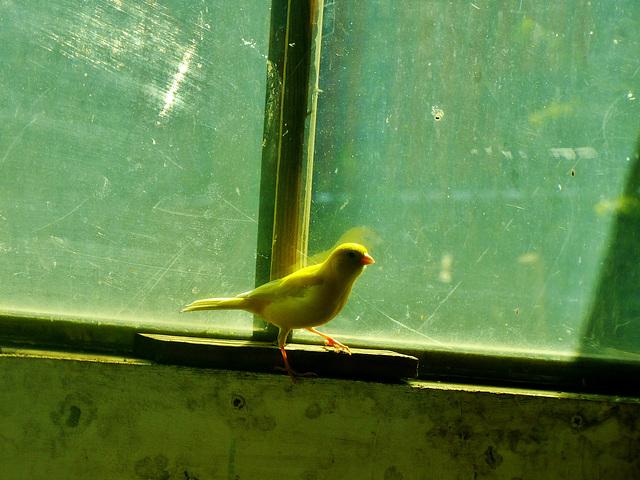 The Little Birdhouse at Byker City Farm