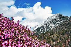 Spring Heath