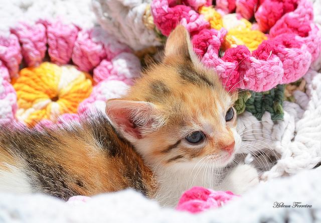 ~ Our kitten Maya ~