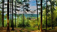 Schöne Aussicht auf die umliegenden Berge und Wälder