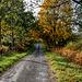 East Woodlands, November, 2010