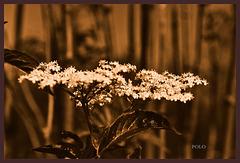 Flora en el bosque