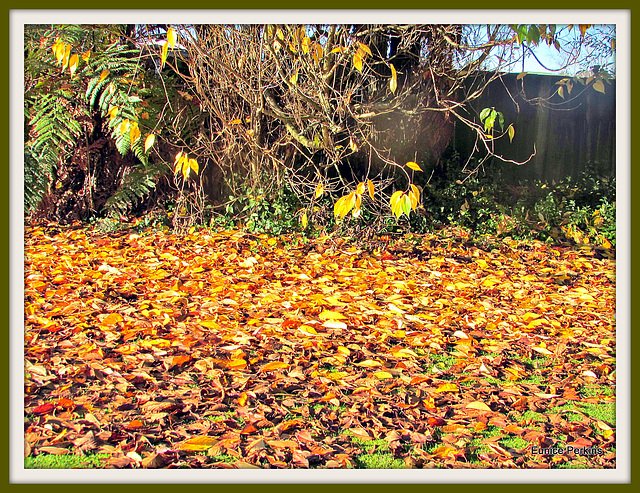Autumn Carpet.