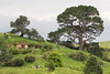 Neuseeland - Hobbiton Movie Set