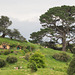Neuseeland - Hobbiton Movie Set