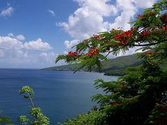 Baie de Pointe Noire, Guadeloupe