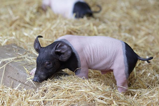 Explored - Süße Schweinerei I (Wilhelma)