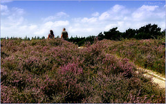 Walking between the Heather...