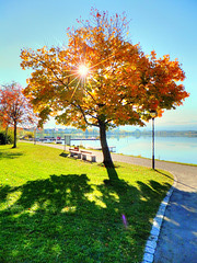 Autumn Sun...  ©UdoSm