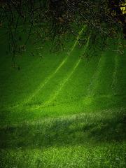 Through the Green