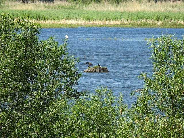 20170519 1664CPw [H] Nationalpark Fertö-Hansag, Neusiedler See