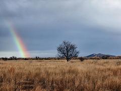 I'm Seeing Rainbows