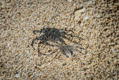 Schattenspiel am Ngapali Beach (© Buelipix)