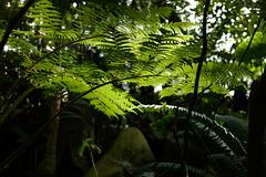 grande serre du Jardin des plantes