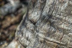 Furrowed Tree Trunk