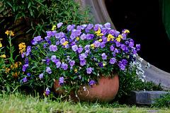 T0A1615 Le pot de fleur de Gandalf